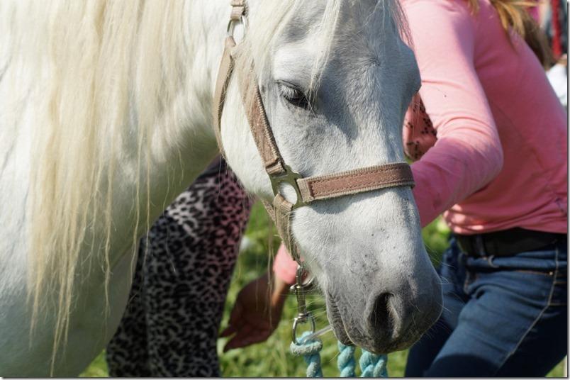 Pony reiten Hoffest Bauer Mann