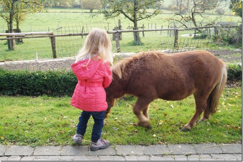 Pony auf dem Bauernhof Keppel